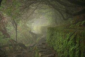 Misty Madeira von