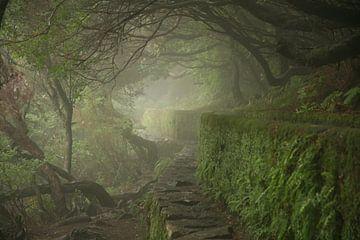 Misty Madeira sur Gijs de Kruijf