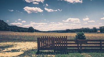 Felder, Wiesen und Wälder im Herzen von Polen - Sommer, Sonne, Kaktus! von Jakob Baranowski - Off World Jack