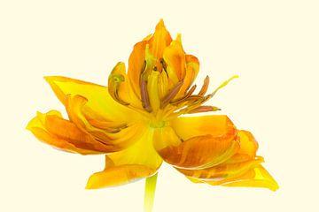 """Kunstwerk """"Gelbe Tulpenblüte"""" van Monika Scheurer"""