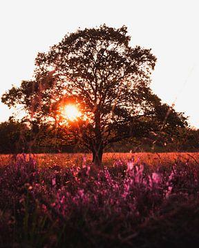 Blühende Heides bei Gasterse Duinen, Drenthe, die Niederlande von Marion Stoffels
