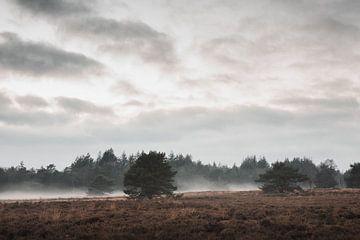 Een mistige Veluwe | De Veluwse heide van Nanda van der Eijk