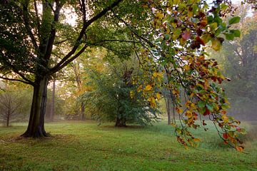 Autumn leaves sur Dirk van Egmond