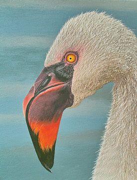 Flamingo Porträt von Russell Hinckley