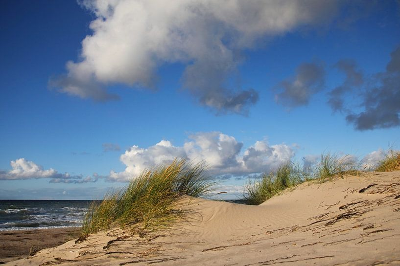 Dünen im Wind von Ostsee Bilder