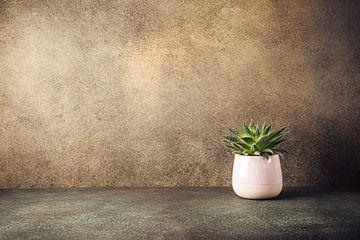 Sukkulente Zimmerpflanze von Iryna Melnyk