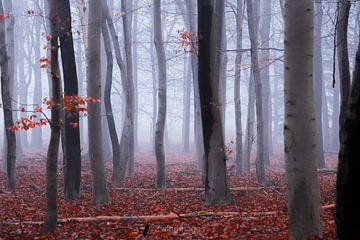 Verdrehter Nebel von Rik Zwier