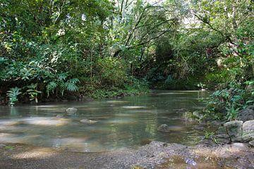 In het regenwoud in Hawaii van Louise Poortvliet