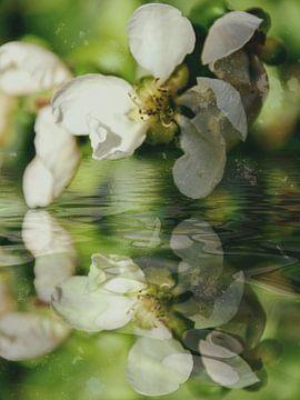 Quince water van Christine Nöhmeier