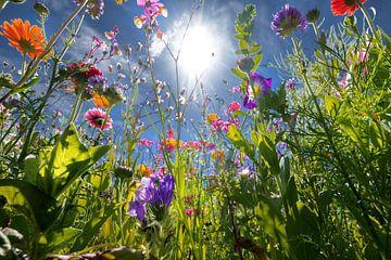 Bloemen tegenlicht van Kurt Krause