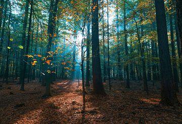 Der explodierende Wald von Joris Pannemans - Loris Photography