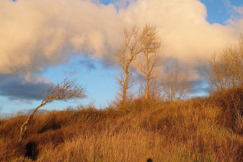 Fette Wolken am Abend von Ostsee Bilder