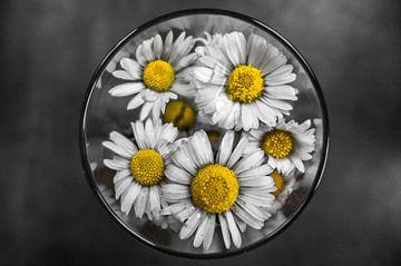 Blumen im Glas von Pierre Verhoeven
