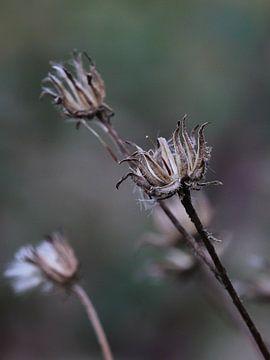 macro bloei von Bianca Muntinga