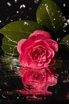 Die Tränen der Liebe... von As Janson