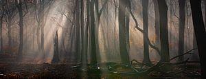 SONNENAUFGANG IM HERBSTWALD von Algon Photography