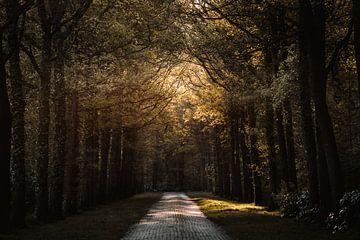 Gouden weg door het Twentse bos van Holly Klein Oonk