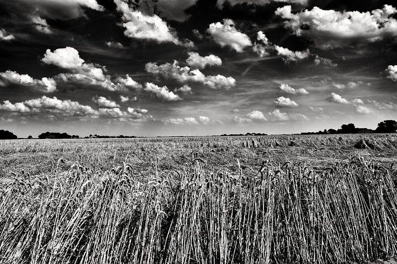 Graan in polderlandschap in zwart-wit van Jan Sportel Photography