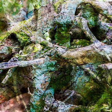 Branches  II van Caroline Boogaard