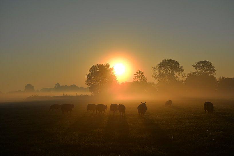 September-Morgen von Johanna Varner