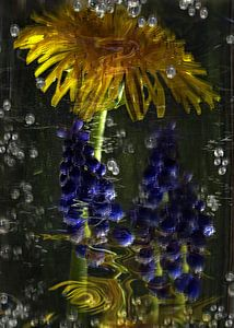 Sparkling - paardebloem en druiven hyacint