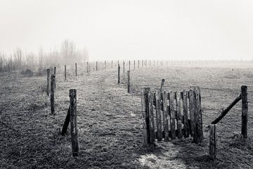 Landschap in de mist van