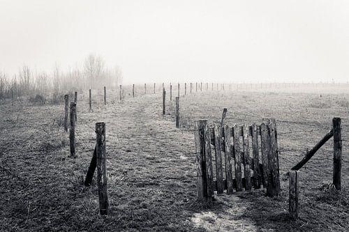 Landschap in de mist