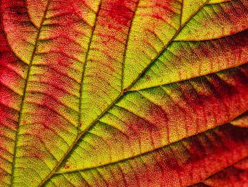 Herbstzeitschrift von Marieke Funke
