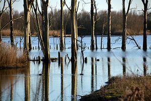 Lijnenspel van boomstammen in het water van de Biesbosch van FotoGraaG Hanneke