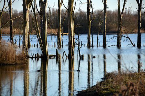Lijnenspel van boomstammen in het water van de Biesbosch