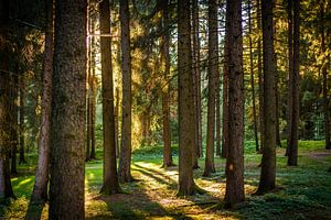 zonsondergang in het bos van