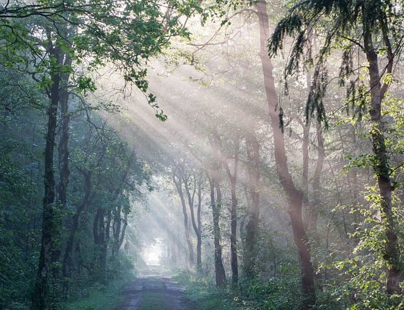 Zonnestralen in bos van Alex Dallinga