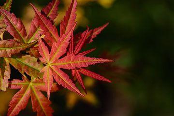 Feuilles d'automne sur Ulrike Leone