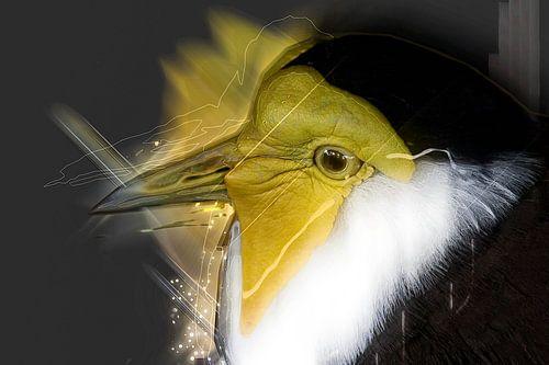 Bird von