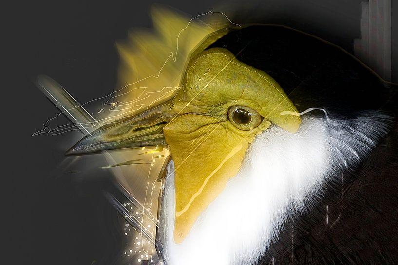 Vogel van Jos Verhoeven