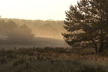 Bos met nevel op het veld en tussen de bomen van whmpictures .com
