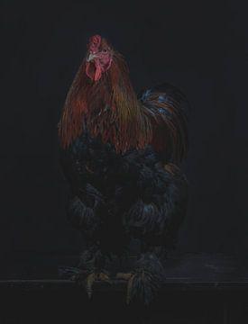 Coq sur Wietske Lavrijssen