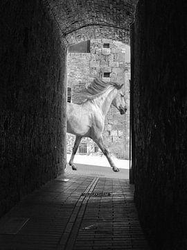 Pferd auf der Straße von Henk de Boer
