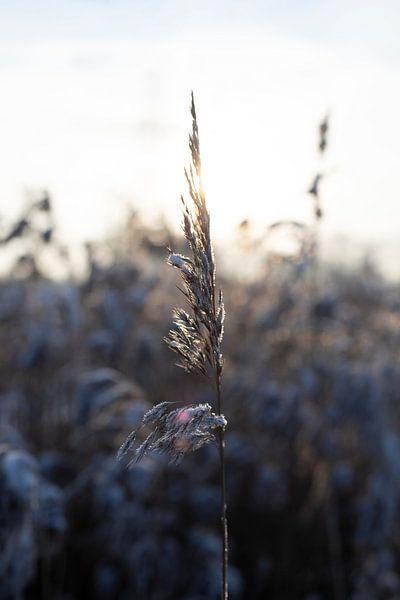 Cristaux de glace de grains entiers sur Marieke Tegenbosch