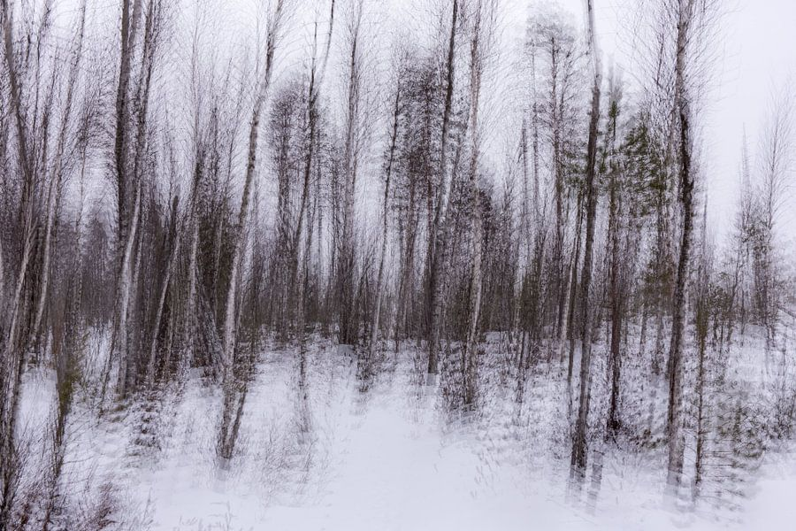 Abstract Taiga