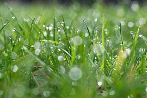 Dauw op het gras van Judith Cool