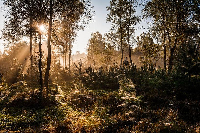 Zonnestralen in het bos van MICHEL WETTSTEIN