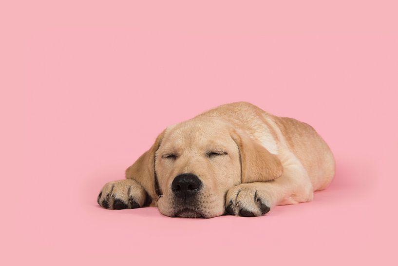 Sleeping beauty van Elles Rijsdijk