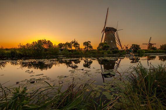 Gouden Kinderdijk van Marc Smits