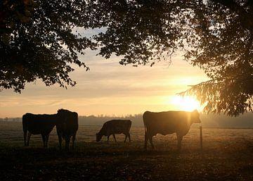 Drachtige koeien onder bomen in het ochtendlicht sur Ina Roke