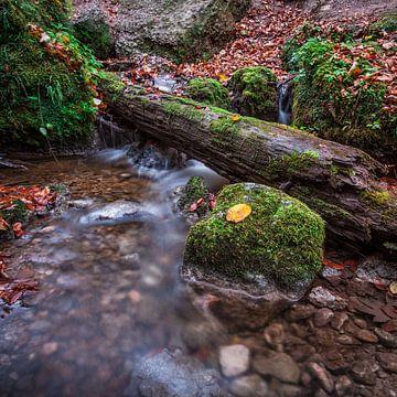 Herbst im Wald 1x1 van Hannes Cmarits