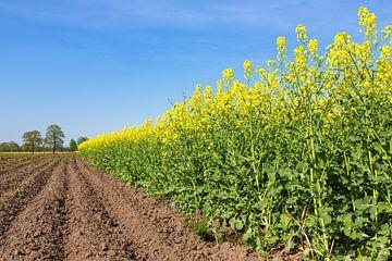 Niederländische Landschaft mit gepflügtem Feld und gelbem blühendem Feld von Rapssamenanlagen von Ben Schonewille
