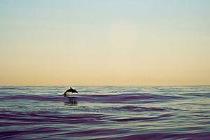 Dolphin van