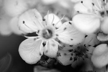 Blüte in Schwarz und Weiß von Gerard de Zwaan