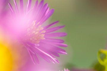 Belle fleur printanière floue sur un fond d'herbe verte. Plante ensoleillée dans la nature. sur Yusuf Dzhemal